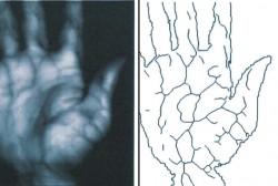 Das Infrarotbild der Handvenen bildet die Grundlage für das Venenmuster, das Palm Secure zur Authentifizierung nutzt (Bild: Fujitsu).
