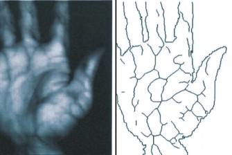 Das Infrarotbild der Handvenen bildet die Grundlage für das Venenmuster, das Palm Secure zur Authentifizierung nutzt. (Foto: Fujitsu)