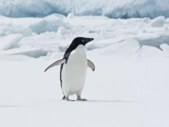 Linux-Experten: Gesucht wie Pinguine am Nordpol (Bild: Shutterstock /Dmytro Pylypenko)