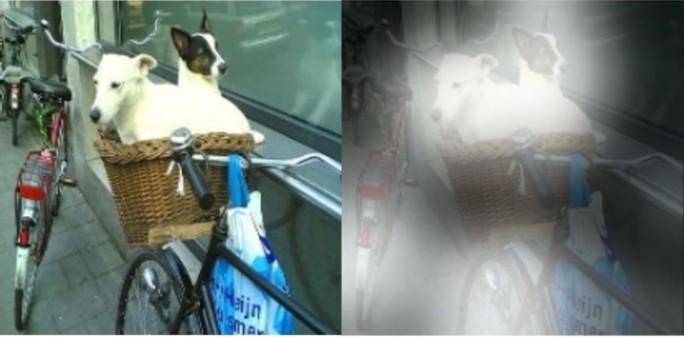 """Beispiel für Deep Learning: Eine von Microsoft entwickelte Technik soll Fragen wie """"Welches Tier sitzt da im Fahrradkorb"""" beantworten können (Bild: Microsoft)"""